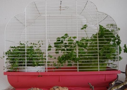 Kräutertöpfe in einem Käfig