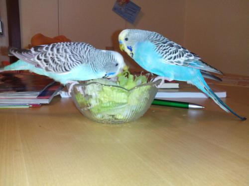 zwei Wellis Salatschüssel