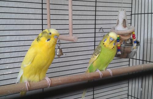 Kassel Nicki und Paco