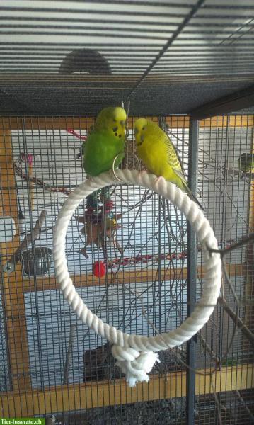 Bern grünes Paar