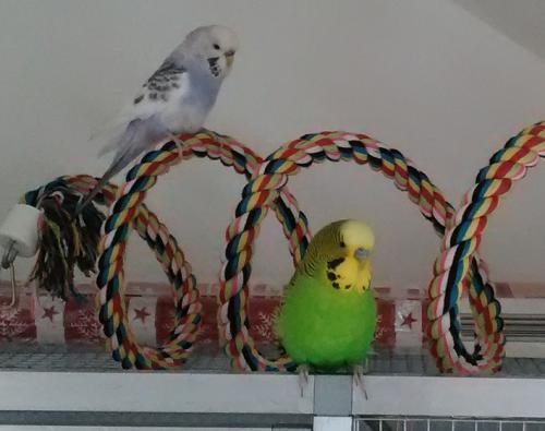 2 Wellis mit Seilspirale