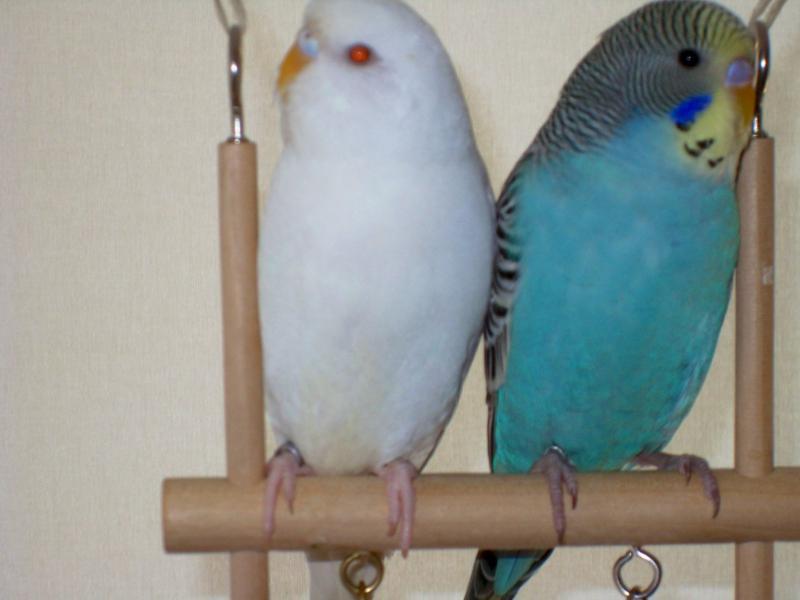Welli-Paar gemeinsam auf Schaukel