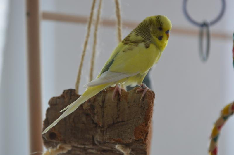 gelber Schecke auf Korkstück