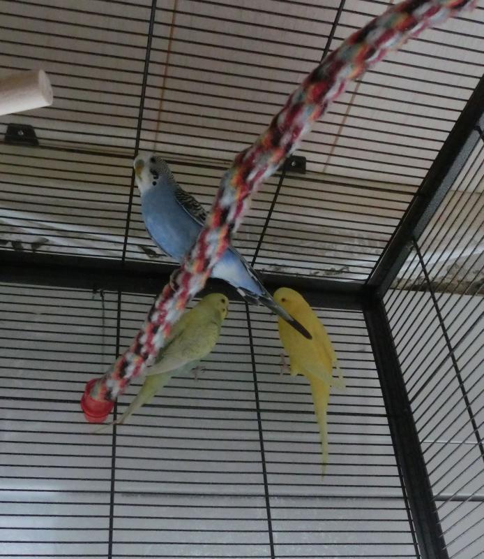 drei Wellis im Käfig Seilspirale