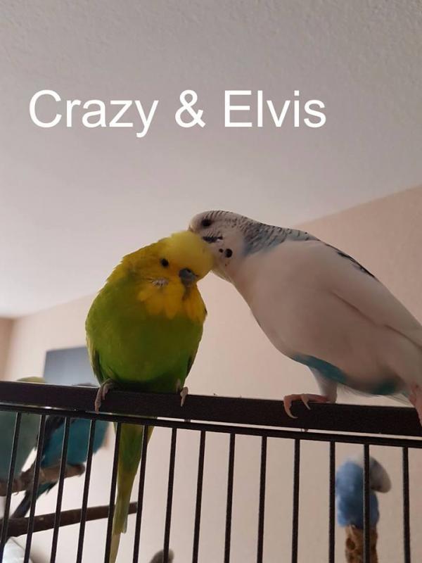 Welli-Paar Crazy und Elvis