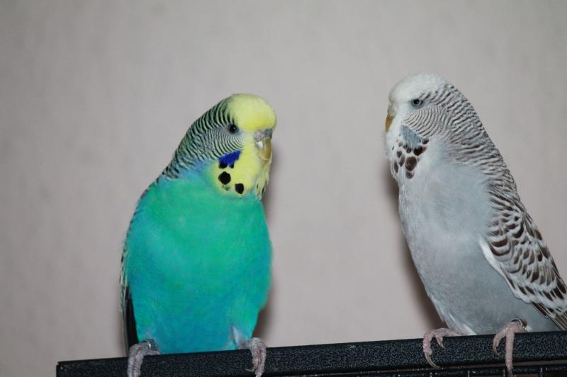 Welli-Paar Max und Peggy