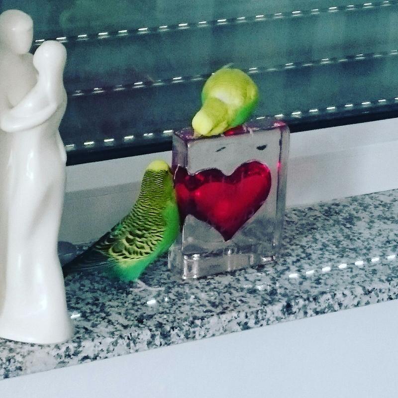 zwei grüne Wellis mit rotem Glasherz