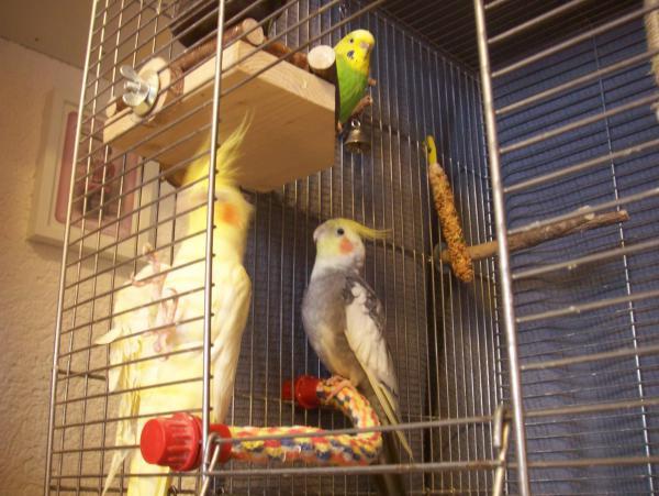 Welli-Henne und zwei Nymphen