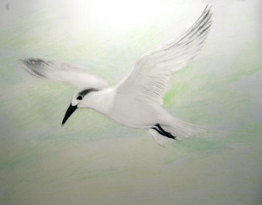 fliegende Möwe gezeichnet