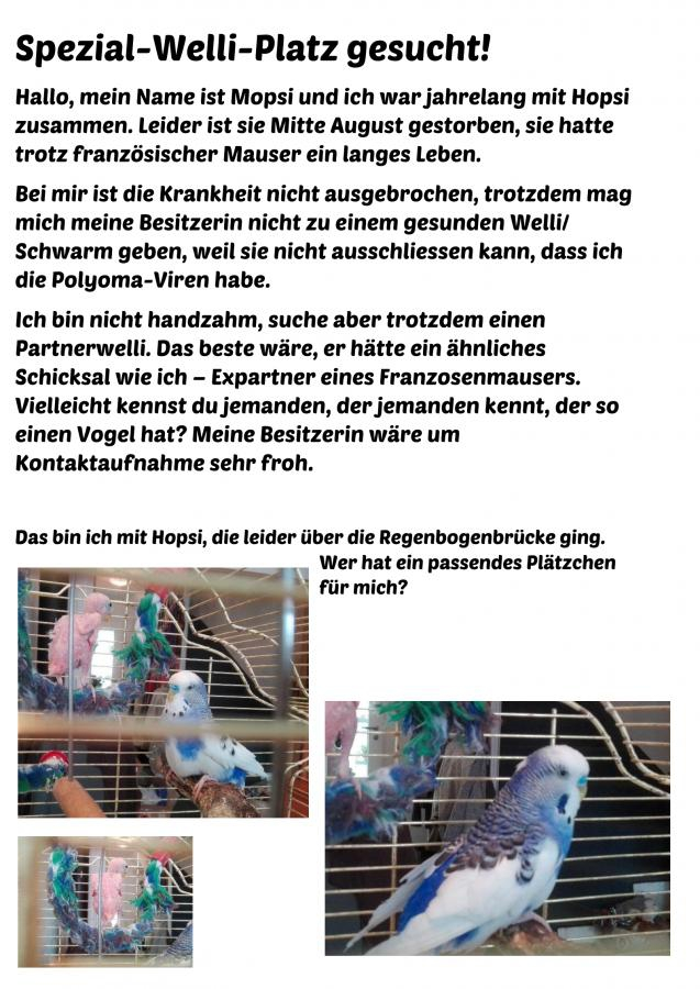 Neodema Polyoma Welli KW 38 - 16