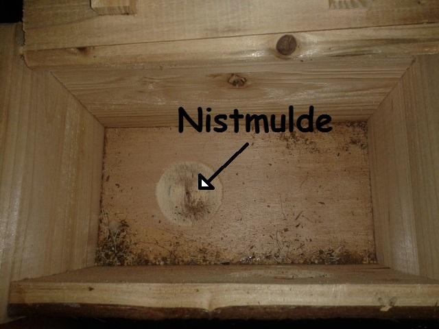 warum nistk sten in den m ll geh ren wellensittich. Black Bedroom Furniture Sets. Home Design Ideas