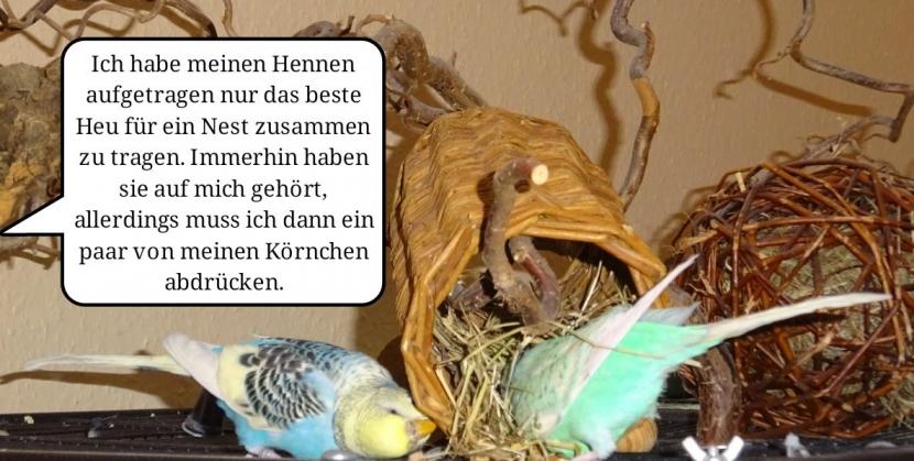 zwei Hennen suchen Heu