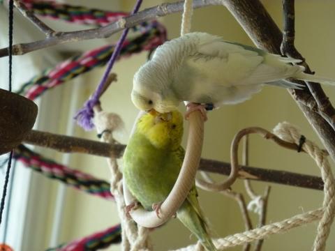 Lilly und Louis