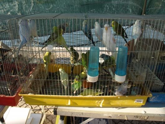 Vogelmarkt2