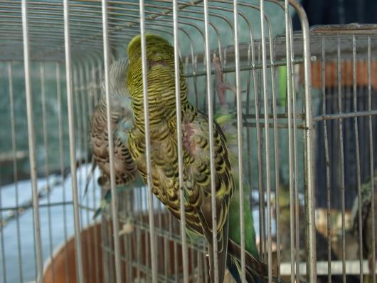 Vogelmarkt3