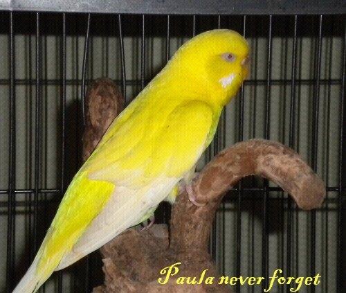 Paula - Never forget