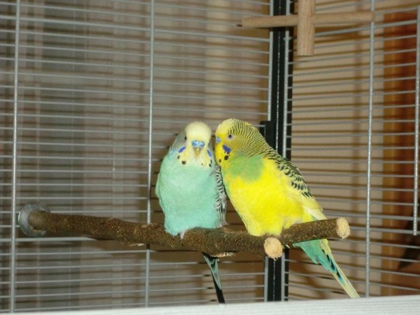Pepi & Chico