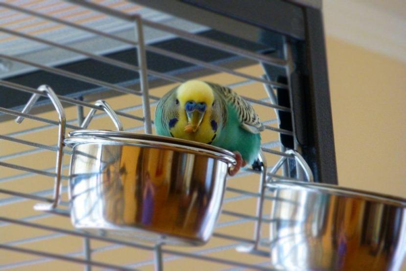 Pepi auf seinem Futterschüsselchen