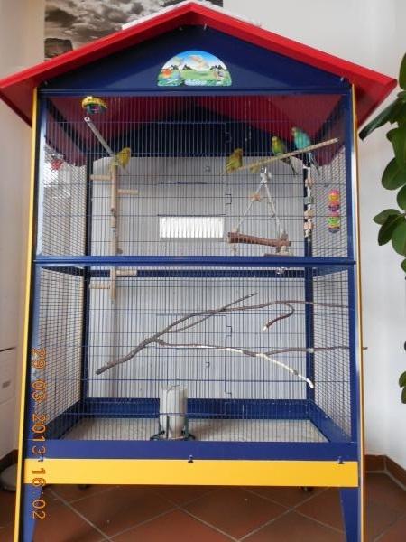 4 Wellensittiche Vermittlung Vogelkäfig Vogelvoliere günstig zu verkaufen