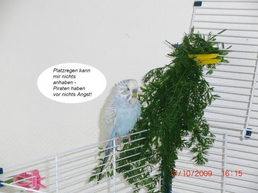 regensturm