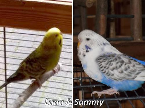 Roaser Luna und Sammy Pärchen KW 09 - 17