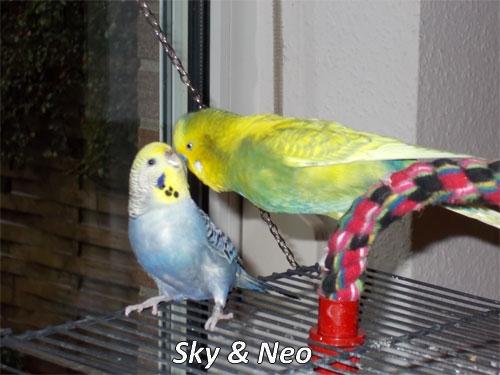 Roaser Sky und Neo Wellipärchen KW 09 - 17