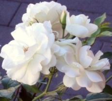 Eine Blume im Garten kann eine besondere Bedeutung besitzen