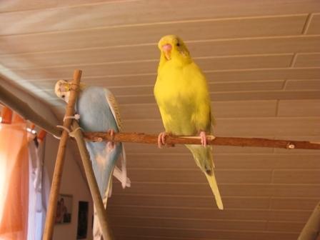Sammy und Blacky