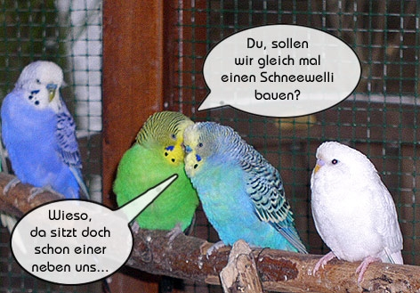 Wellensittich Comic