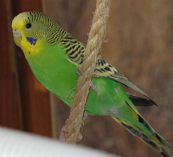 grüne Henne sucht neues Zuhause