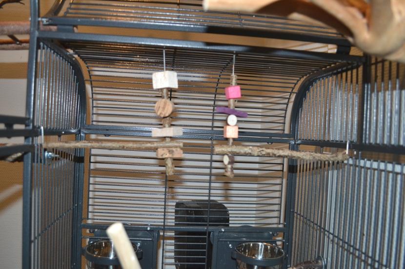 fertige Schaukeln im Käfig