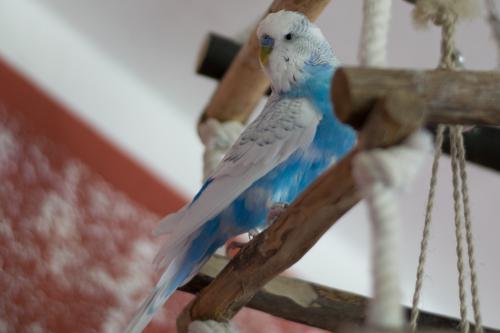 blau-weißer Schröder