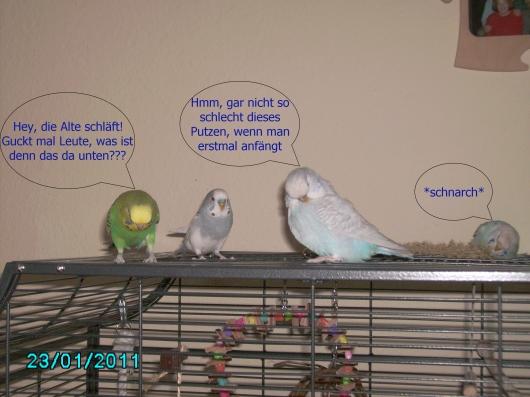 Tiffy und Zausi gucken