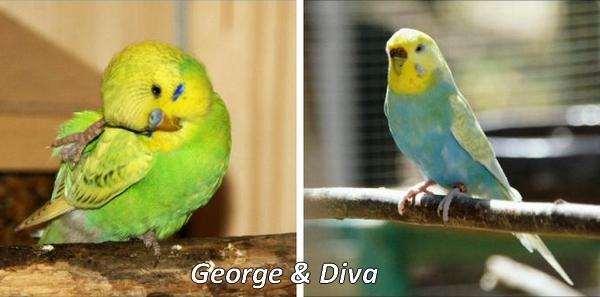 Sharylee George und Diva Welli-Paar KW 04 - 17