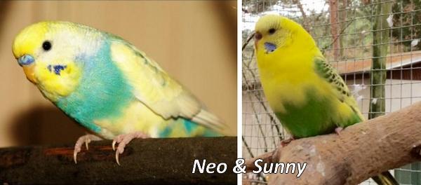 Sharylee Neo und Sunny Welli-Pärchen KW 04 - 17