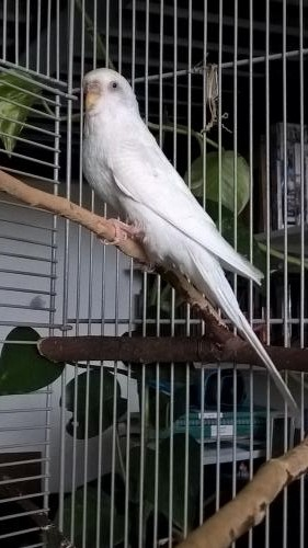 Shiro auf dem Ast