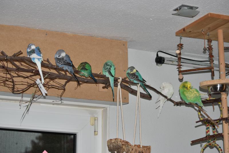 Einzelwelli mit sechs neuen Freunden