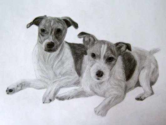 zwei liegende Hunde
