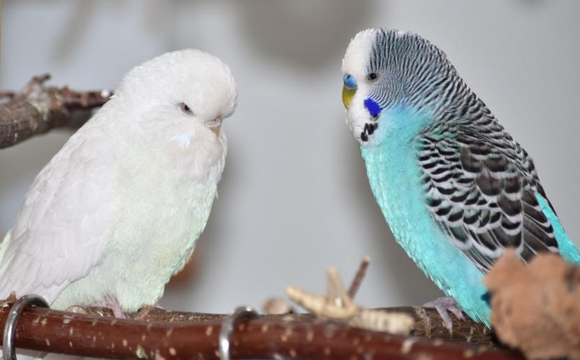 Snow und Benno