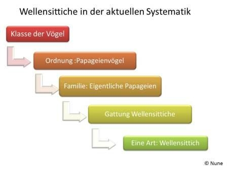 Systematik der Wellensittiche