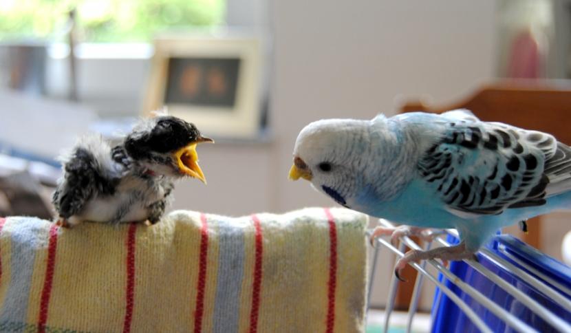 Vogelvergleich