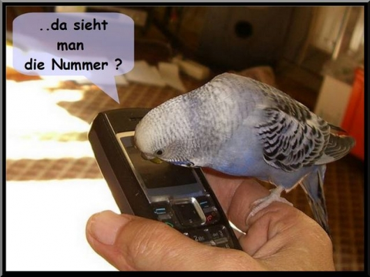 Telefon Wellensittich lustig