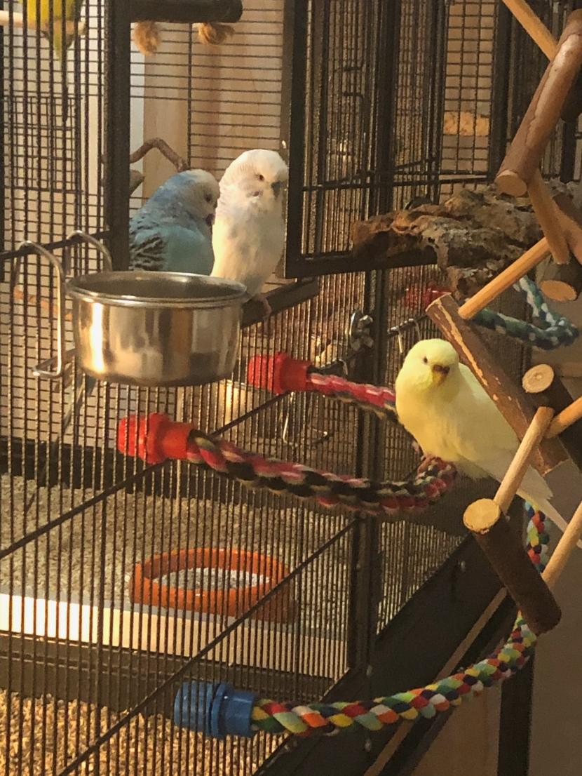 Vögel in der Türe
