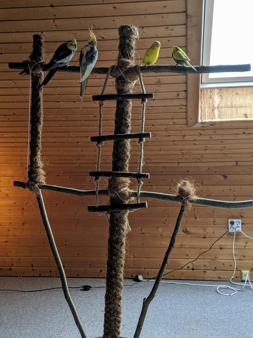 Wellensittiche und Nymphensittiche auf Vogelbaum