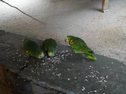 drei Papageien mit Futter