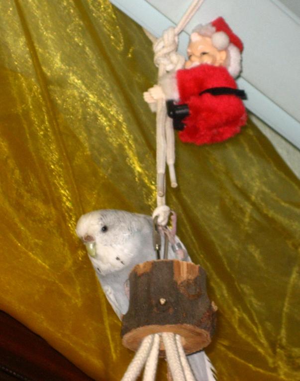 Hope und der Weihnachtsmann
