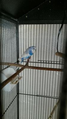 weißblau2