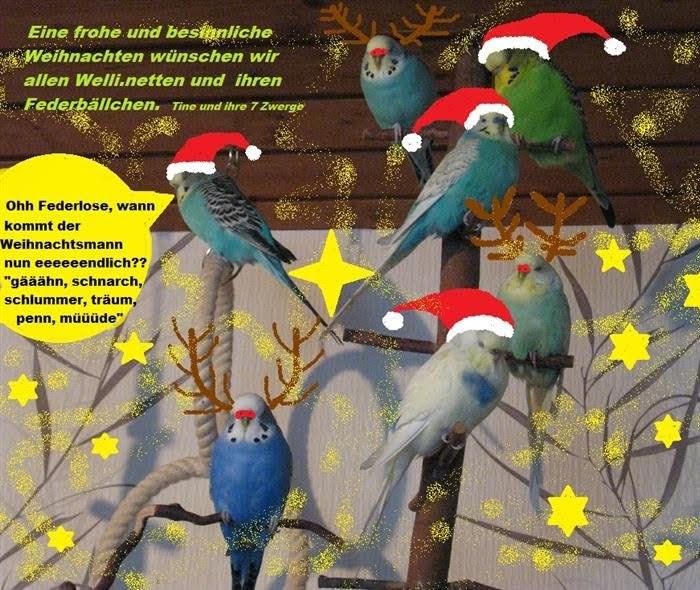 Wellibande wartet auf Weihnachtsmann