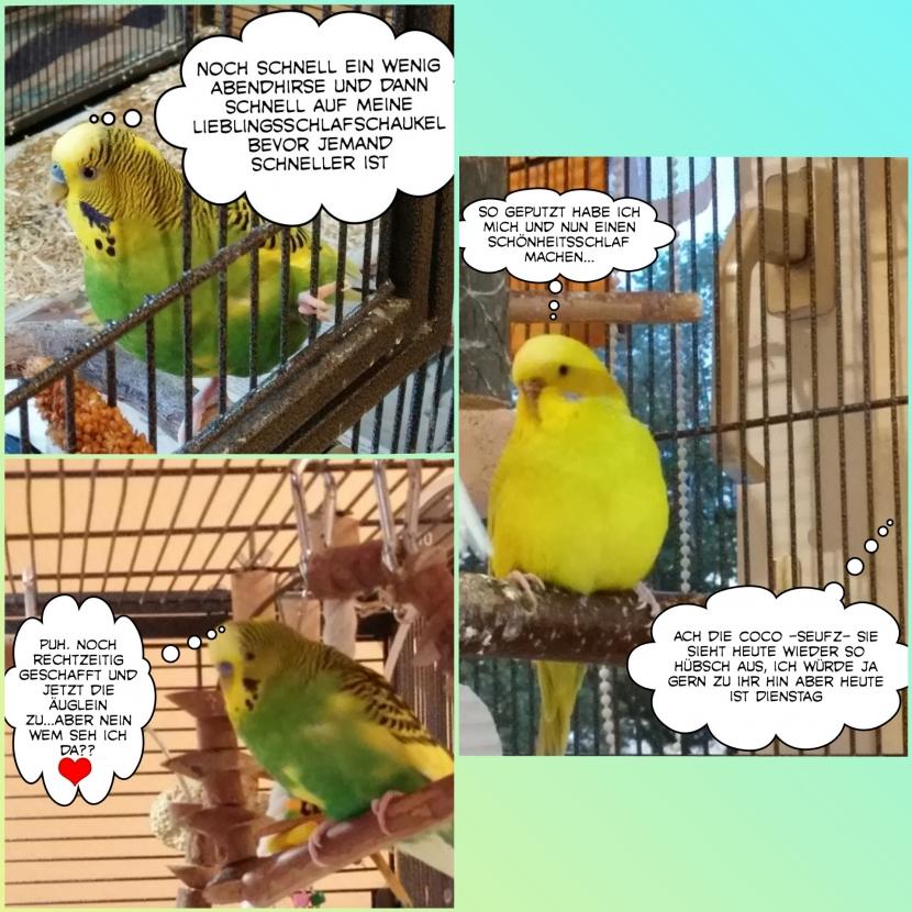 comic Einführung von Welli Otto