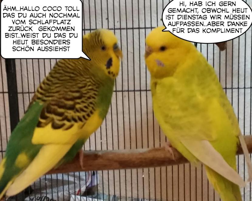Gespräch Otto und Coco